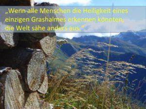 Grashalm