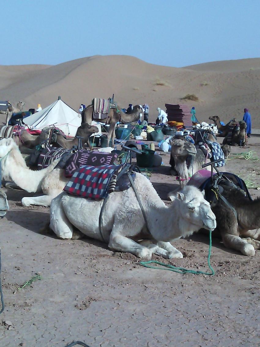 Kamele packen