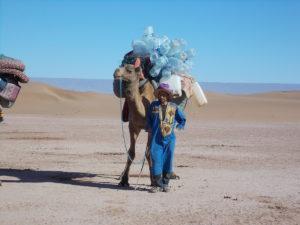 Kamel mit Wasserkanistern