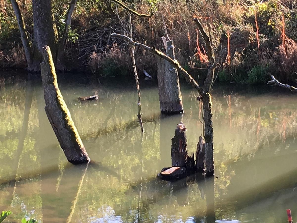 abgebrochene Bäume im Wasser